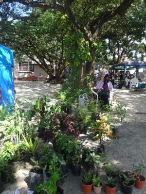 A women sits under a tree with potted plants for sale in front of her