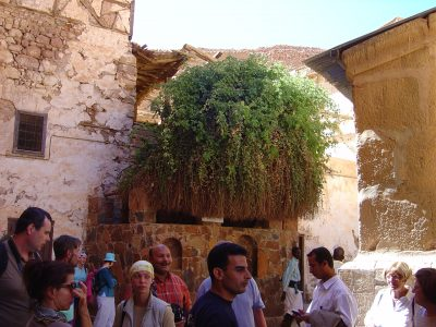 A group of pilgrims stand in front of the green bush that is known as the Burning Bush