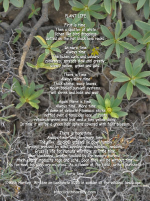Poem Plant Life by Ruth Hartley in white text centred over a background picture of green succulents and a network of thorns over volcanic earth, taken at Lanzarote